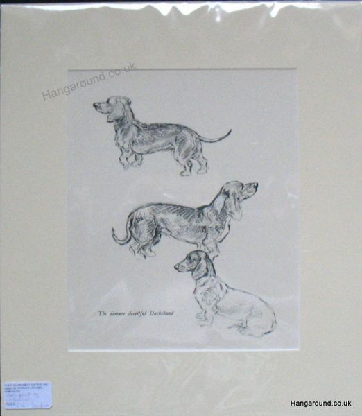 Little Wire Haired Dachs sitting facing forward  - Dax D5 - 1930's print by Lucy Dawson